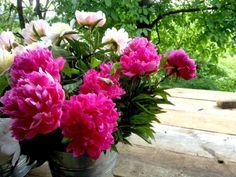 VOM HÜGEL Steiermark Flower Farm, Peonies, Shabby, Green, Flowers, Plants, Pictures, Red, Dekoration