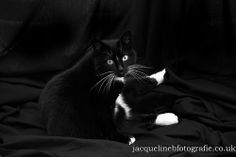 The very lovely Daisy -The perfect black and whitew (1 of 1)