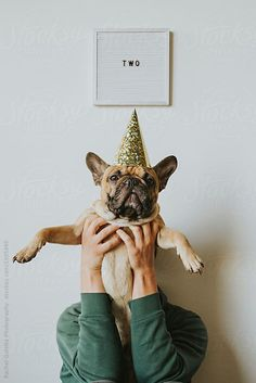 Second Birthday - Letters Spell Two and French Bulldog Puppy in a Party Hat by Rachel Gulotta Photography for Stocksy United #DogBirthday