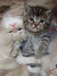 A pile of kitties