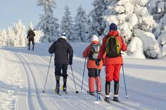 A group of people cross-country skiing in the forest