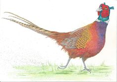 Pheasant commission - graphite drawing, watercolour pencils, acrylic paint, inks & gold leaf by Sophie E Tallis