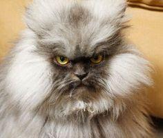 Tremblez humains ! Les chats sont de viles creatures qui veulent dominer le monde !