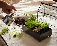 My first terrarium was an elaborate landscape, with little figurines holding hands on a park bench among the mossy plants. It convinced me heaven must be a