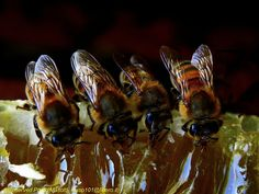beautiful colors    bon appetit! - Bees and Honey  - Missano (zocca modena italy) 047 - DVD 14 by primo masotti, via 500px