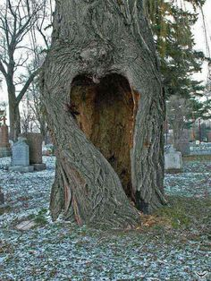 Amazing, a heart shaped opening in a tree trunk.and the tree is rooted and growing in what appears to be an old cemetery. Beautiful but perhaps just a bit sad as well, I love it. Heart In Nature, All Nature, Heart Art, Amazing Nature, Nature Tree, I Love Heart, Happy Heart, Humble Heart, Crazy Heart