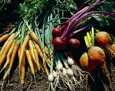 Information about: Gardening through the sseasons, Vegetables to grow during fall, Preparing your garden bed for winter, How to freeze herbs, plus tips on growing: Spinach, peas, lettuce, beets, onions, kale, carrots