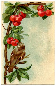 Beautiful Vintage Bird with Cherries - Free Printable Instant Art