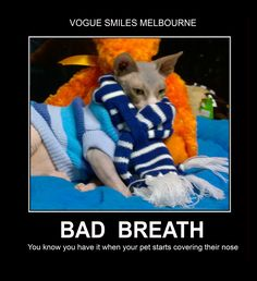 Looking for a great dentist? Vogue Smiles Melbourne provides exceptional affordable complete dental services-General and Cosmetic Dentistry. Funny Cat Photos, Cute Animal Photos, Animal Pictures, Funny Cute Cats, Funny Cat Memes, Dental Humor, Melbourne Cbd, Sphynx Cat, Bad Breath