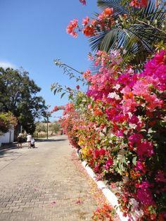 Todo el color de la naturaleza en la calle. #RinconDeGuayabitos, en la #RivieraNayarit.