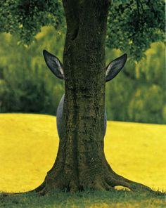 Hide and seek donkey...
