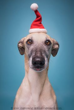 96 days until Christmas - Sorry, couldn't resist :-)  For media and licensing requests: info@elkevogelsang.com