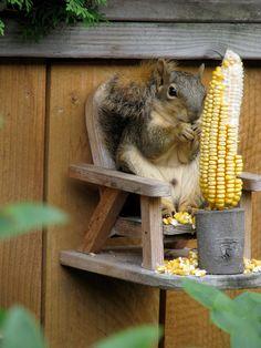 Squirrel Feeder Chair/ With Cob Holder