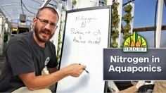 Nitrogen in Aquaponics: The Most Crucial Plant Nutrient -Bright Agrotech