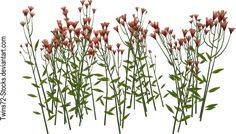 Flower 2 by Twins72-Stocks on DeviantArt