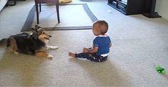 Ingen trodde att deras hund och bebis gjorde detta, så de tog fram kameran och filmade. Underbart!