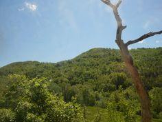 Il verde delle nostre montagne