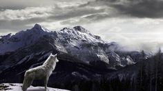 White Wolf Mountain Wallpaper HD - Best Wallpaper HD