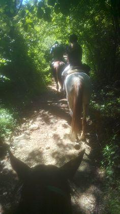 Sentiero per l'Alpe Horses, Animals, Portion Plate, Animales, Animaux, Animal, Animais, Horse