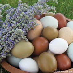 Beautiful eggs!