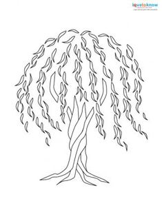 Coloring Page Willow Tree. 179653 328x425 willow tree tattoo jpg Amazing Weeping Willow Tree Tattoo Design Ideas and Meaning