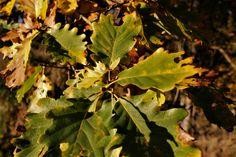 Plant Leaves, Fruit, Plants, Photography, The Fruit, Flora, Plant, Photograph, Fotografie