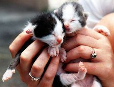 Top 30 most cutest baby cat pictures
