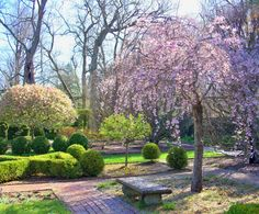 Weeping Cherry and Stone Bench, Ashland Estate Garden