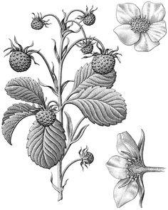 https://www.behance.net/gallery/27764505/Plants-are-Ingredients