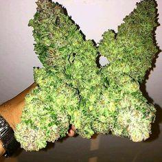 Stoner Girl, Herbs, Smoke, Herb, Smoking, Acting, Medicinal Plants