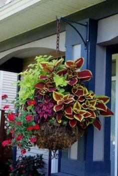 container garden#hanging basket