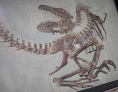 Near perfection with Gorgosaurus