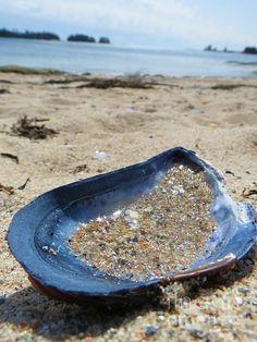 Mussels anyone? Stonington Maine