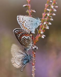 gorgeous butterfly picture