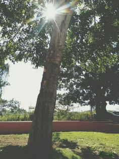 #Tree #Isabela #PR #PuertoRico #Photography #BYJQG Puerto Rico, Plants, Photography, Fotografia, Fotografie, Puerto Ricans, Photo Shoot, Planters, Plant