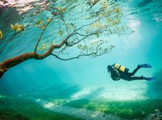 Underwater Park: Photograph by Marc Henauer.  Every spring, melting snow creates a dreamscape in Tragöss, Austria. Green Lake, which for most of the year is no more than six feet deep, expands with the inflow of snowmelt, swallowing part of the park that surrounds it: trees, hiking trails, benches, bridges, and all. The lake's depth reaches some 30 feet and provides a unique experience for divers—for a few weeks at least.