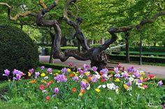 Souvenirs du printemps, Parc de la Taconera, Pampelune, Navarre, Espagne.