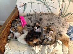 22-mães-de-filhotes-que-estão-terrivelmente-sobrecarregadas-10