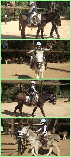 Iniciación a la equitación. - Introduction to Riding. Cortesía de Rucs del Corredor, Canyamars (Barcelona).