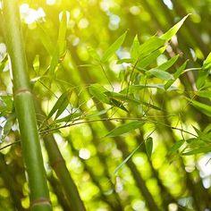 Het poeder uit de steel van de bamboe is een natuurlijke plantaardige scrub, die de huid zachtjes reinigt en onzuiverheden wegpoetst.