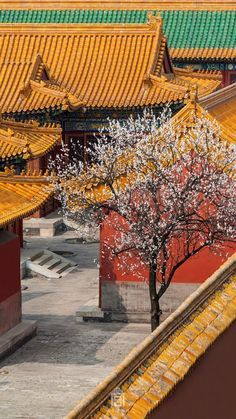 China Architecture, Ancient Architecture, Peking, Art Asiatique, Chinese Garden, City Aesthetic, Environment Concept Art, Old Building, Ancient China