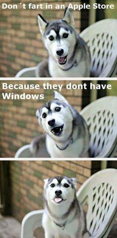 37 Funny Puns That Are So Bad They're Simply Hilarious Funny Puns used to be the most annoying things. Everyone would roll their eyes when they heard a funny pun. They were about as bad as dad jokes. everybody funny Dog Jokes, Corny Jokes, Funny Dog Memes, Funny Animal Memes, Cute Funny Animals, Funny Animal Pictures, Funny Quotes, Husky Jokes, Puns Hilarious