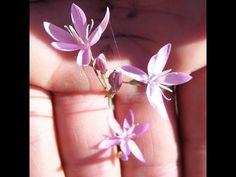 Geissorhiza hesperanthoides - rare wine cup botanicals and ornamentals Rare Wine, Rare Species, Bulb Flowers, Seasons, Plant, Seasons Of The Year