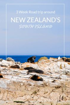 new zealand south island road trip. There is so much to see on New zealand's south island and in this guide I go over everything I did on the south island including the best places to stay and how long to spend in each place. We took a campervan around the New Zealand South Island, but if that's not your style you just as easily hire a car and have a great time. #newzealand #purenewzealand #newzealandsouthisland
