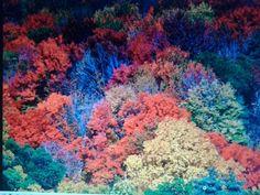COLORES Painting, Art, Colors, Art Background, Painting Art, Kunst, Gcse Art, Paintings, Painted Canvas