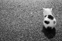 #cat #omg