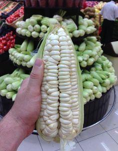 Rare Heirloom Peruvian Giant White Corn Choclo Cuzco Maize Zea Mays var. Fruit And Veg, Fruits And Vegetables, Corn Pie, Strange Fruit, Bean Seeds, Fruit Seeds, Exotic Fruit, Heirloom Tomatoes, Vegetarian Recipes
