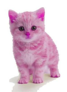 Pink kitten so ute do you think I should do it? Tell me by commenting