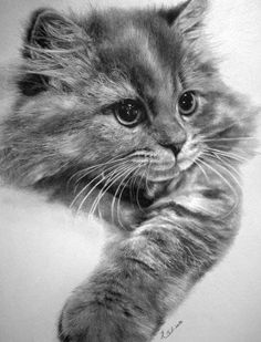 incredible photorealistic pictures of cats with a pencil – the work of Paul Lunga from Hong Kong, he was a graphic designer.