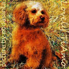 """#トイプードル #イラスト 野川公園での散歩途中の草むらの中の愛犬ティアモをお絵描きしました。  Sam Smith """"How Will I Know"""" Whitney Houston Cover // Hits 1 // SiriusXM http://youtu.be/kwHACITShSI"""